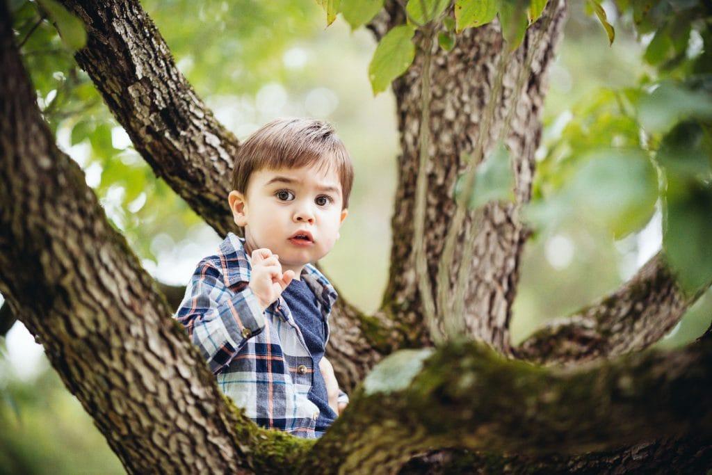 Familienfotograf Lörrach Freiburg Junge im Baum